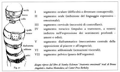 7 segmenti reich